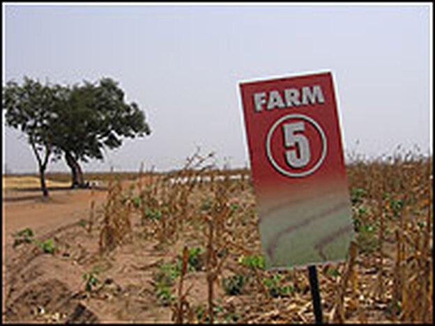 Farm 5: The 2,500 acres allocated to Alan Jack in west-central Nigeria.