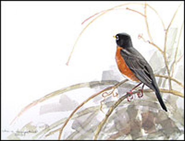 <em>Robin in Trumpetvine</em> by Julie Zickefoose.