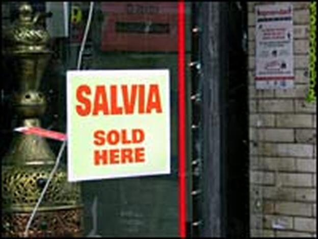 A head shop on Chicago's North Side advertises that it sells the hallucinogenic herb Salvia divinorum.