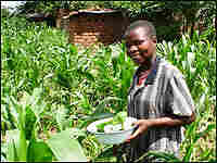 Martha Phiri forages for pumpkin leaves to make a free lunch.