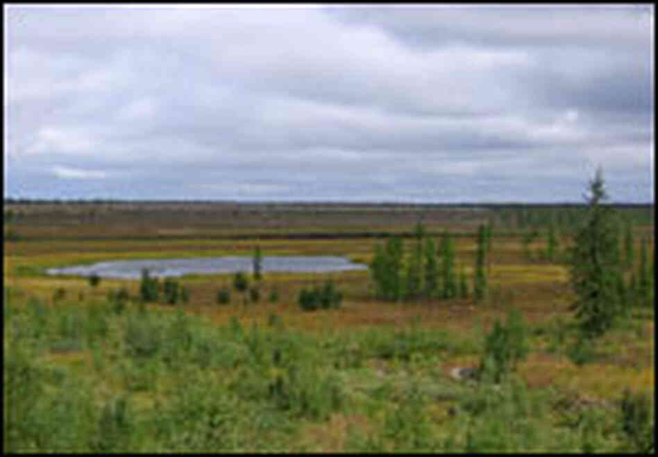 The western Siberian tundra is dotted with thousands of small ponds and lakes.