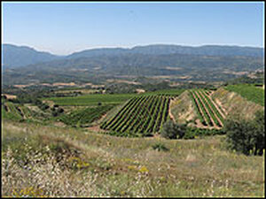 The Torres Vineyards, above the town of Tremp in the Catalonia.
