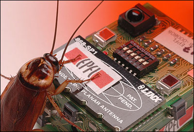 A cockroach and a boxy robot coated with cockroach scent.