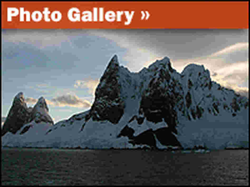 Photo Gallery: Destination Antarctica