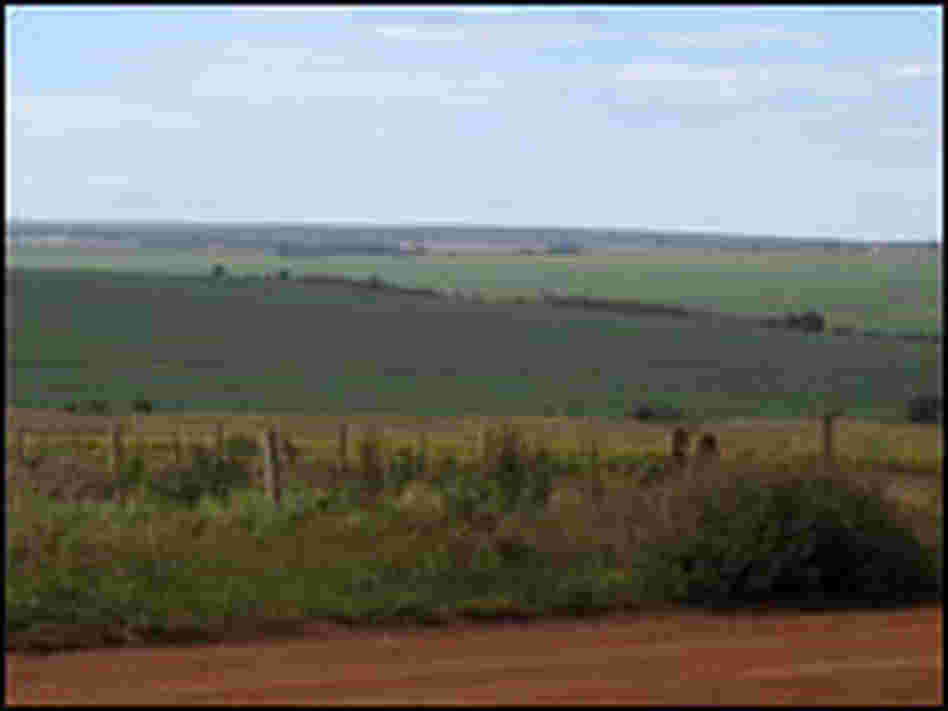 Some 13 million acres are blanketed green with soy in the Brazilian state of Mato Grosso.
