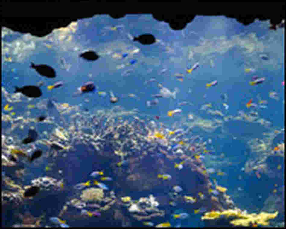 An aquarium in the coral reef exhibit.