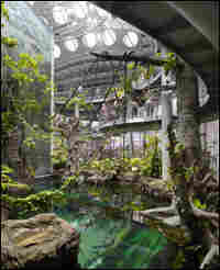 The rainforest at the California Academy of Sciences building