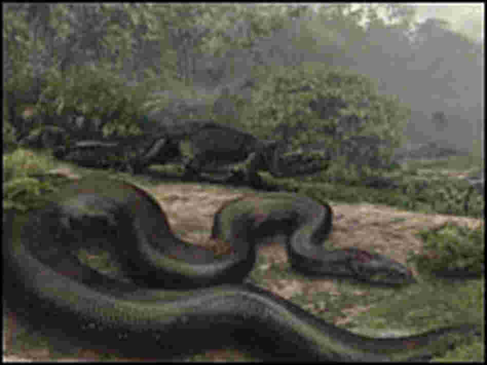 Artist's interpretation of how Titanoboa might have looked.