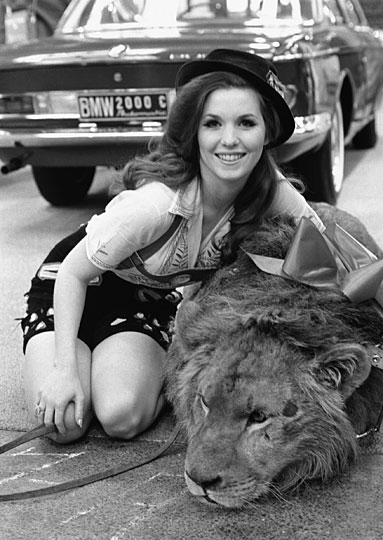 lion540.jpg