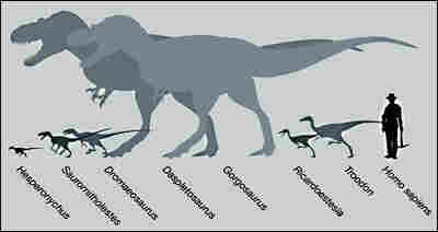 Hesperonychus was about the size of a chicken