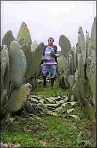 In the town of Milpa Alta near Mexico City, Abrahm Avila tramps through his nopal field.