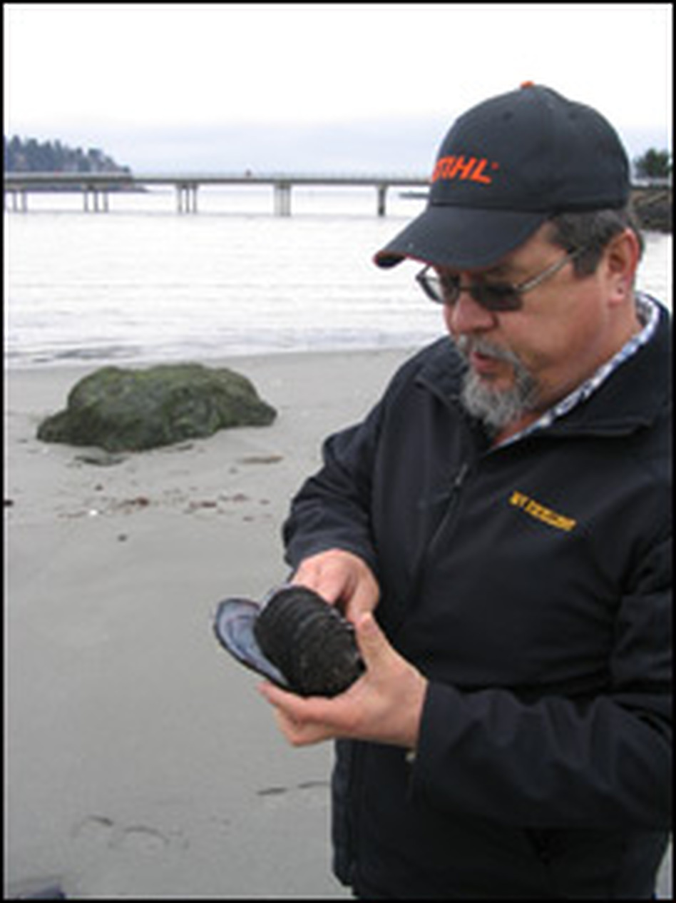 Makah tribal member Joseph McGimpsey holds the type of mussel shell that used to be made into whale harpoons.