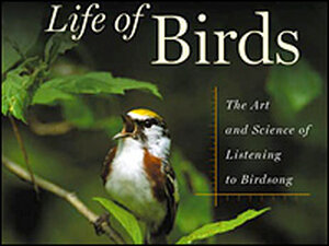 Detail from the cover of Donald Kroodsma's 'The Singing Life of Birds'