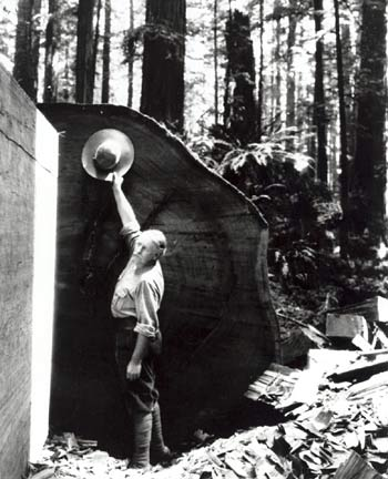 Charles Kellogg and a fallen redwood used to carve his Travel Log.