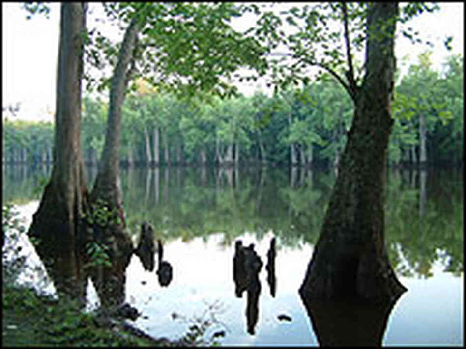 Near Bayou DeView, where the ivory-billed woodpecker has been spotted.