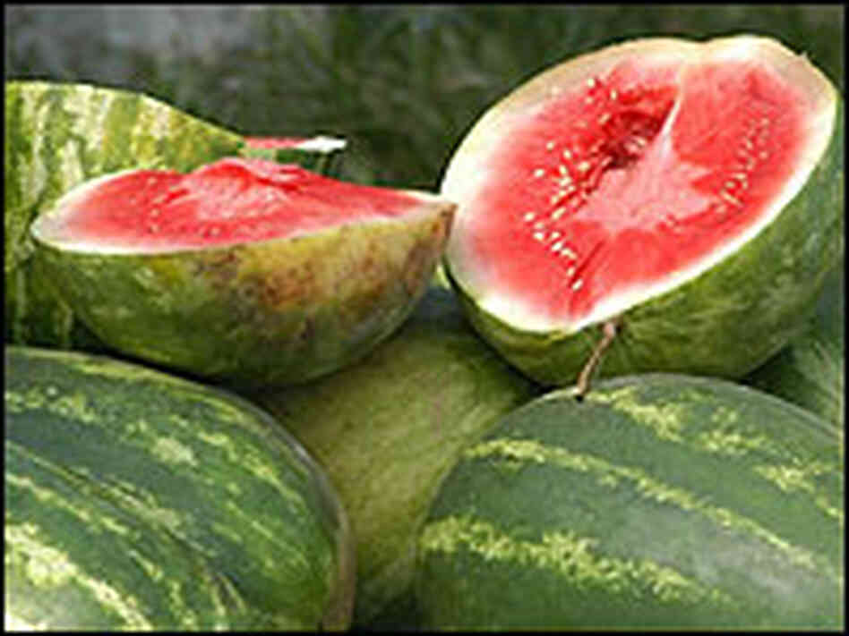 A crop of watermelons.