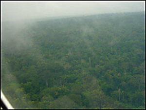 Even today the Amazon jungle is still a dense and forbidding environment. Credit: Candice Millard.