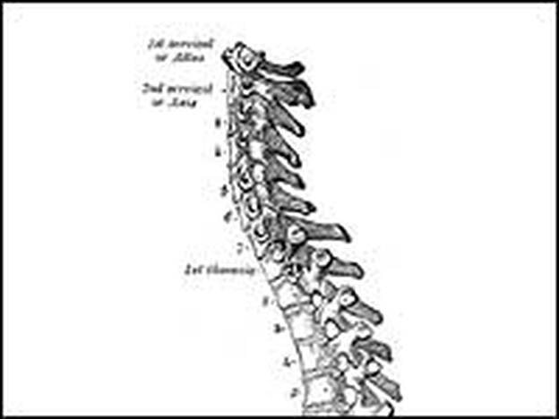 The lumbar, or lower, region of the  back. It's the spine's complexity that makes it vulnerable.