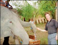 Ted Osius gives an elephant a grateful pat.