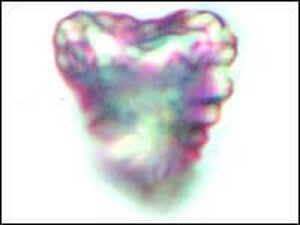 A heart-shaped comet particle, returned to Earth by the Stardust spacecraft.