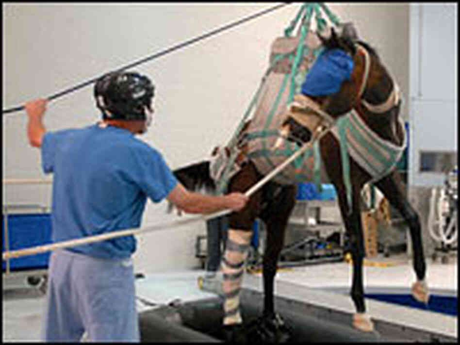 Barbaro is lifted out of a special recovery pool after surgery.
