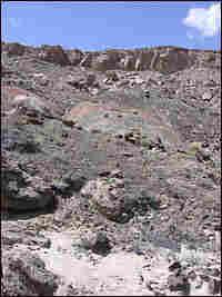 A healthy desert hillside. Credit: Richard Harris, NPR.