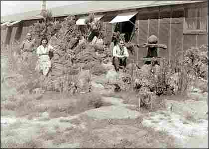 Kogita garden at the Minidoka Internment Camp.