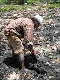 Benancio Nieto, a subsistence farmer, works in a field.