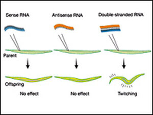 A graphic shows a basic test involving RNA.