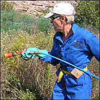 Kasey Conway sprays Russian knapweed with toxic herbicide.
