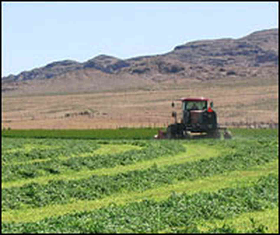 Freshly cut alfalfa in Snake Valley, Utah, is starkly green next to the brown desert nearby.