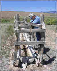 Dean Baker gazes at a waterless trough once used by sheep and wild horses.