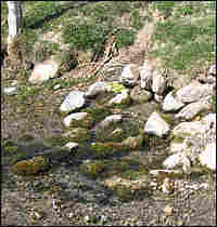 A desert spring emanates from rocks in Snake Valley, Nevada.