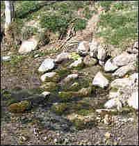 A desert spring emanates from rocks in Snake Valley, Nevada.