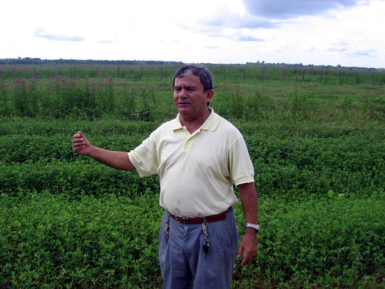 Father Edilberto Sena stands in a soy field.