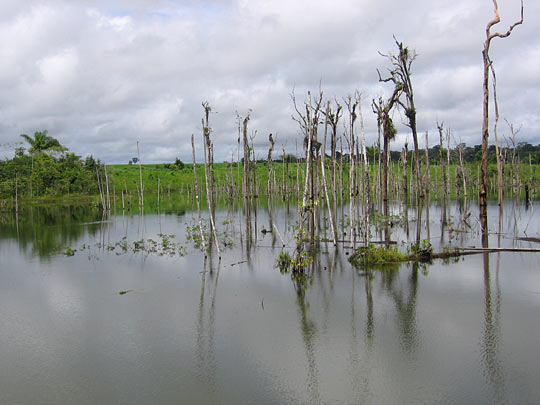Cattle ranching, logging and soy farming have taken a toll on the primary Amazon forests.