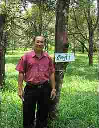 Dr. Songpol Somsri stands next to his Chantaburi No. 1 tree.