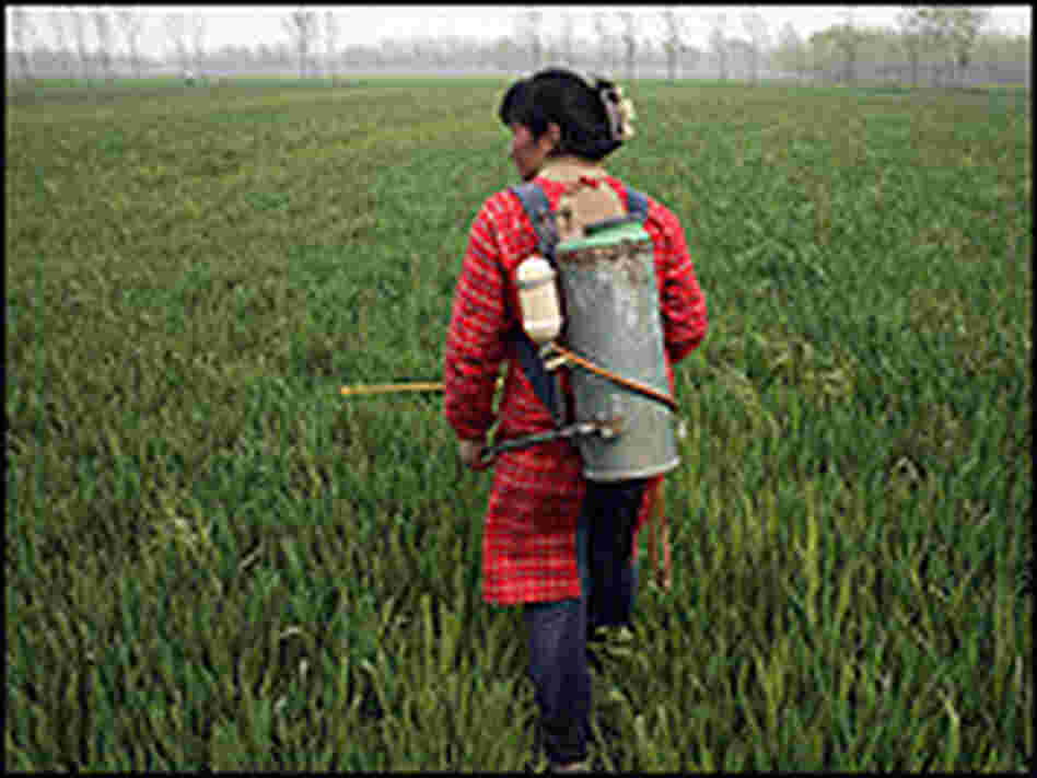 A woman sprays pesticides on a wheat farm near Xuzhou, China.