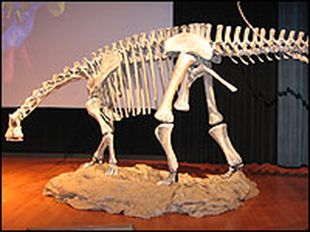 A common dinosaur in its day, <em>Nigersaurus</em> grew to a length of some 30 feet, with a hip height of 8 feet and a weight comparable to an elephant.