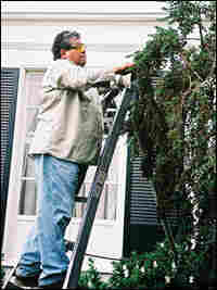 Catalino Tapia trims a tree at a client's home.