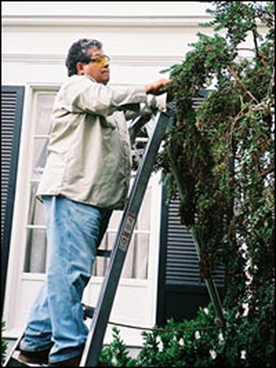 Bay Area Gardeners Foundation founder Catalino Tapia trims a tree at a client's home in an affluent suburb of San Francisco. Tapia's long-time clients donated money to the foundation, which gives college scholarships to students, regardless of their immigrant status.