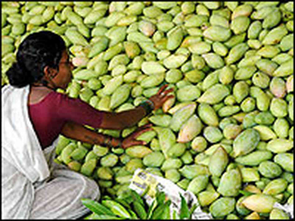 An Indian farmer sorts through mangoes at a wholesale fruit market in Hyderabad.