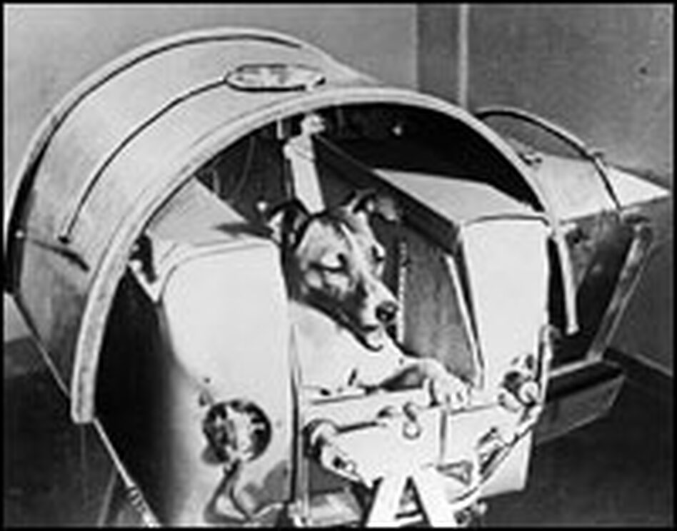 "Laika, the first living creature sent into space, died aboard Sputnik II in November 1957. The Soviet dog inspired the song ""Sputniks and Mutniks"" by Ray Anderson and the Homefolks."