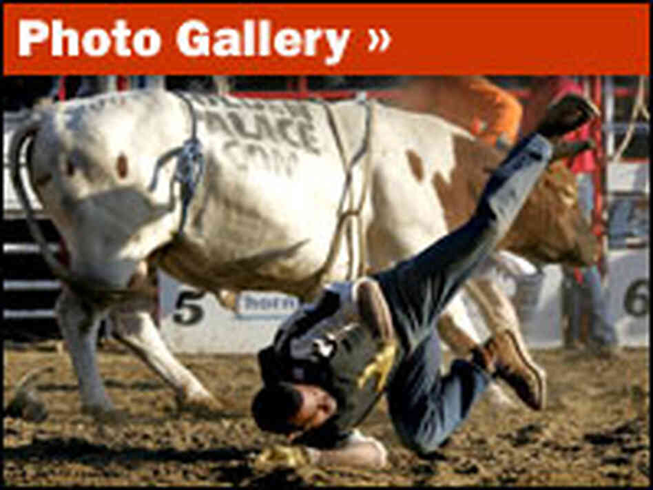 Rodeo Photo Gallery: Rough Riders and Bulldoggers