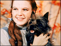 Toto with Judy Garland