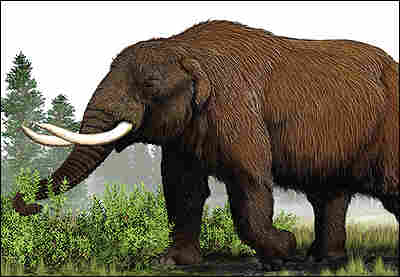 An artist's illustration of a mammoth.