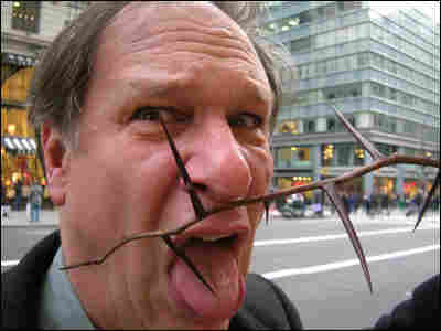 Robert Krulwich with a honey locust thorn in Manhattan.