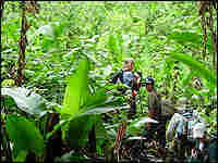 Team entering jungle