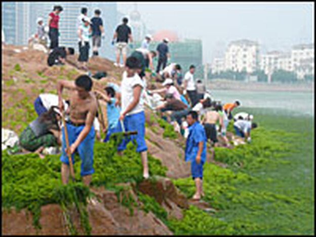 Thousands of volunteers are helping to manually scoop the green algae out of the sea. Experts say the <em>Enteromorpha prolifera</em> algae was flushed into Qingdao city waters by southerly winds and ocean currents.