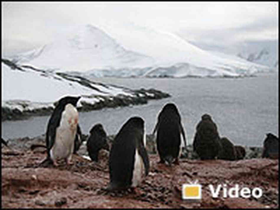 Video: Touring Antarctica